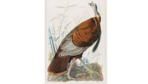 collectibles fairest fowl robb report