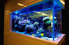 Reef Aquascape Designs Aquarium Aquascape Tropical Ocean Salfwater Aquarium Canopy