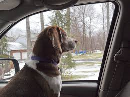 how to train your dog to jump into a car or truck pethelpful