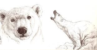 polar bear sketches by kyndrii on deviantart