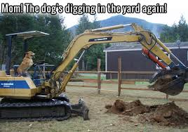 Bulldozer Meme - the dogs digging in the yard again funny memes dog meme lol funny