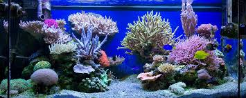 Reef Aquascape Designs The Powerful Aquascape Of Finnish Reefer Jafar News Reef Builders
