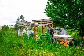 blog u2013 portland urban beekeepers