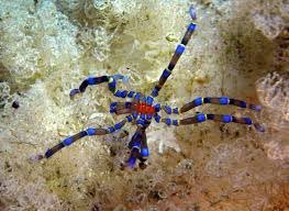 Male Spider Anatomy Absurd Creature Of The Week This Isn U0027t A Spider But It Does Have