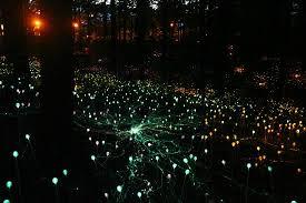 Atlanta Botanical Gardens Magical Light Show Picture Of Atlanta