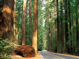 California forest images Plan your visit redwood forests california get me travelled jpg