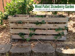 Strawberry Garden Beds Help There Are Slugs In My Pallet Garden One Hundred Dollars A