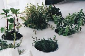 growing plants indoors with artificial light growing indoor plant jennybeautydiva club