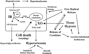 drugs affecting uric acid metabolism sign n symptoms of high