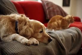 dog euthanasia gentle journey arizona in home pet euthanasia