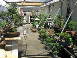 the bonsai shop