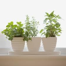 apartment plants manhattan living apartment plants winter care
