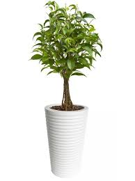 nmn designs modern tree containers and planters small trees