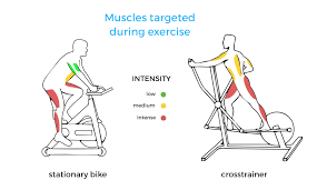 what muscles does a cross trainer work vescape