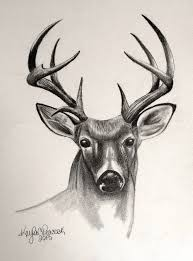 trend drawing of a deer 52 for with drawing of a deer living