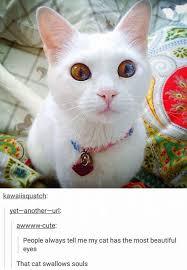 Cat Memes Tumblr - cats image gallery meme cat and galleries