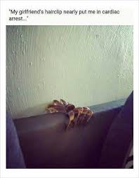 Funny Spider Meme - 10 funny spider memes today 4 the next step is burn the house