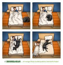 Katze Schlafzimmer Ja Bett Nein Darf Der Hund Mit Ins Bett U2013 Hundeurlaub De U2013 Blog U2013 Urlaub Mit