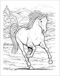 wonderful horses coloring book dover nature coloring