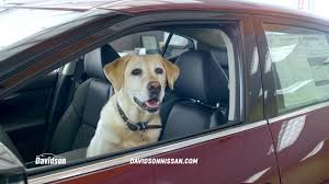 nissan rogue for lease dog days of summer at davidson nissan buy a new nissan rogue
