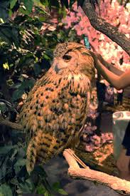 Owls Head Transportation Museum Barn Fresh Harajuku Owl U0027s Forest Tokyo Japan Travel Tourism Guide