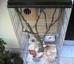 gabbie scoiattoli scoiattoli tamia archivio il forum di inseparabile dove