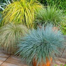 grass pack of 10 amazing ornamental grasses colourful plants