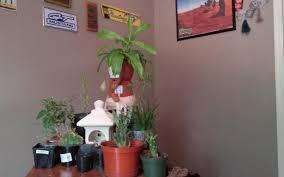 longtime lurker finally decided to share my little desk garden