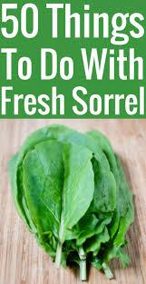 cuisiner l oseille fraiche recettes à l oseille 50 idées pour cuisiner l oseille fraîche