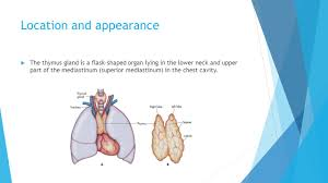 Human Anatomy Thyroid Thyroid And Thymus Gland Ppt Video Online Download
