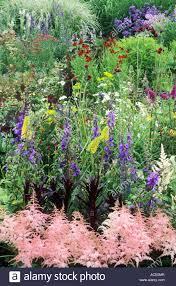 astilbe borders flower flowers garden plant plants stock photos