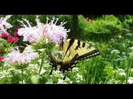 rbg butterfly garden hamilton flowers that attract butterflies