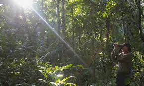 forests november 2017 browse articles forests initiatives wwf