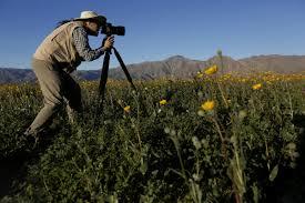 photos super bloom at anza borrego la times
