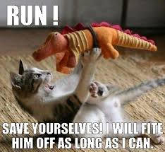 Cat Fight Meme - high five maze crazy cats and mobile casino image 3450044 by