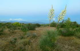 arizona native plants list smart growth fails to save native plants the evidence u2013 seattle