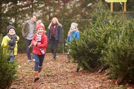 5 tree farms in central arkansas rock family