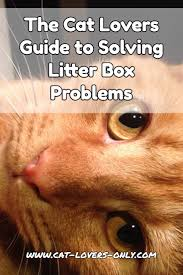 litter box problems a guide for cat lovers