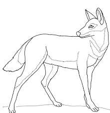 ethiopian wolf coloring page free printable coloring pages