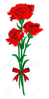 carnation flower clipart clipground