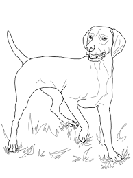 mammals coloring pages vizsla coloring page free printable coloring pages