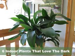 house plants low light very low light houseplants 6 indoor plants that love the dark very
