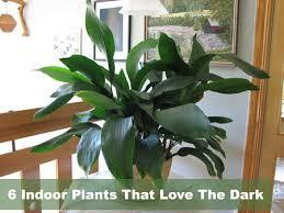 plants low light very low light houseplants 6 indoor plants that love the dark very