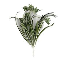 online buy wholesale silk spider plant from china silk spider