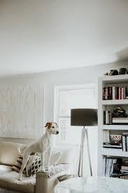 how i spy on my dog meg biram
