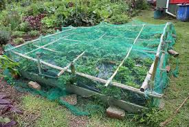 strawberry pod easy edible gardening