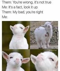 Thursday Meme Funny - pin by megan burton on funny pinterest thursday memes and random