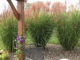 ornamental grass garden design beautiful garden design garden design