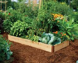 trendy planters raised beds raised beds wooden planter boxes