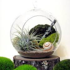 spiral air plant terrarium u2013 sea u0026 asters